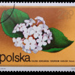 Poland - CIRCA 1972: A stamp - Koreanspice viburnum - Photo