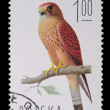 Poland - CIRCA 1974: A stamp - Falco Naumanni - Stock Photo