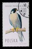 Poland - CIRCA 1974: A stamp - Falco Peregrinus — Stock Photo