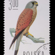 Poland - CIRCA 1974: A stamp - Falco Tinnunculus - Stock Photo