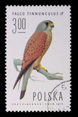 Poland - CIRCA 1974: A stamp - Falco Tinnunculus — Stock Photo