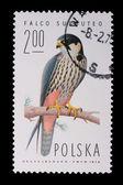 Poland - CIRCA 1974: A stamp - Falco Subbuteo — Stock Photo