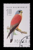 Poland - CIRCA 1974: A stamp - Falco Naumanni — Stock Photo