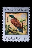 Poland - CIRCA 1978: A stamp - European Kestrel — Stock Photo