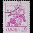 Poland - CIRCA 1968: A stamp - flower — Stock Photo