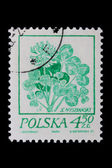 Poland - CIRCA 1968: A stamp - flower — Stock Photo