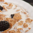 Cereals with blackberry — Stock Photo #4669447