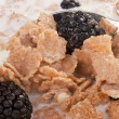 Cereals with blackberry — Stock Photo #4856825