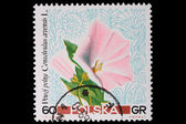 Poland - CIRCA 1967: A stamp - Bindweed — Stock Photo