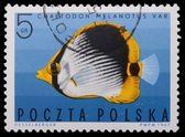 Poland - CIRCA 1967: A stamp - Vermiculated angel — Stock Photo