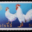Poland - CIRCA 1970: A stamp - Cock — Stock Photo