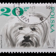 Poland - CIRCA 1968: A stamp - lap-dog — ストック写真