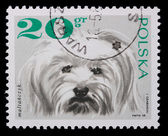 Poland - CIRCA 1968: A stamp - lap-dog — Stock Photo