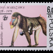 Poland - CIRC1978: stamp - Hamadryad — Stock Photo #5132488