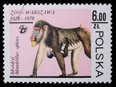 Poland - CIRCA 1978: A stamp - Hamadryad — Stock Photo