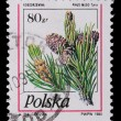 Poland - CIRCA 1995: A stamp - Pine branches with cones — Stock Photo #5206588