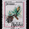 Poland - CIRCA 1991: A stamp - Pine branches with cones — Stock Photo #5212149