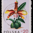Poland - CIRCA 1965: A stamp - Odontoglossum Grande - Stock Photo