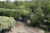 Green Plants — Zdjęcie stockowe