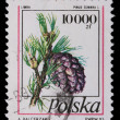 Poland - CIRCA 1991: A stamp - Pine branches with cones — Stock Photo #5256047