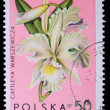 Poland - CIRCA 1965: A stamp - Cattleya Warszewiczi — Stock Photo