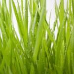 Green Grass — Stock Photo #5276080