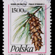 Poland - CIRCA 1991: A stamp - Pine branches with cones — Stock Photo #5276288