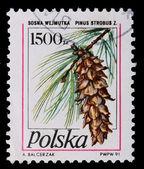 Poland - CIRCA 1991: A stamp - Pine branches with cones — Stock Photo