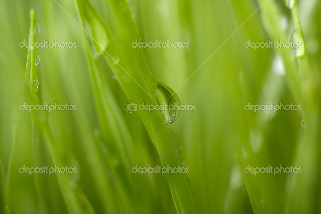 Close-up of a water drop on a green grass blade. — Stock Photo #5372515
