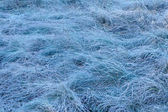 Frozen meadow grass — Stock Photo