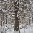 Stock Photo: Bare tree under snow in winter forest