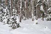Foresta invernale — Foto Stock