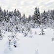 Snowy fir trees in winter forest — Stock Photo