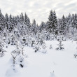 Snowy fir trees in winter forest - Photo