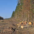 Stock Photo: Deforested arewith chock's piles