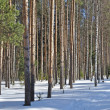Stock Photo: Winter forest on sunny day