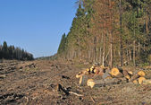 Deforested area with chock's piles — Stock Photo