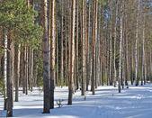 Foresta invernale in giornata di sole — Foto Stock