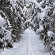 Snowy ski track in winter forest — Stock Photo #4935674