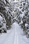 Snowy ski track in winter forest — Stockfoto