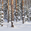 Stock Photo: Tree trunks under snow in winter forest