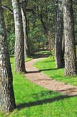 Foot path between old birch trees in park — Stock Photo