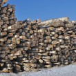 Pile of birch logs — Stock Photo