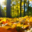 Macro photo of a fallen leaves in autumn forest - Stock Photo