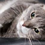 Big cat — Stock Photo #4913421