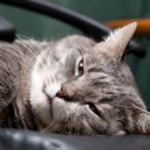 Big cat — Stock Photo #4913424