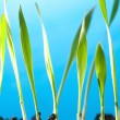 Spring grass — Stock Photo