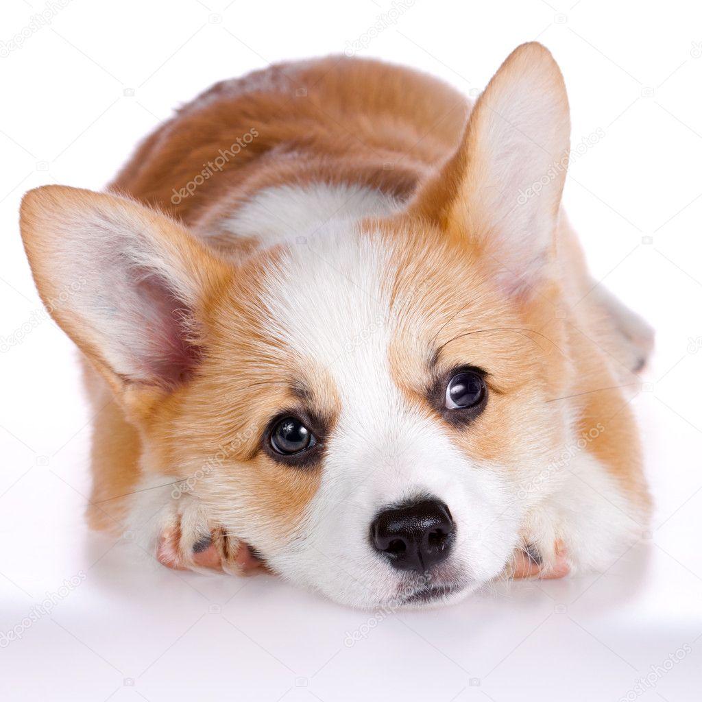 ... popular dog breeds in america expensive dog breeds dog breeds boston
