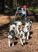 Dog-carting — Foto Stock