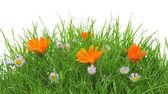 Flores en pasto — Foto de Stock